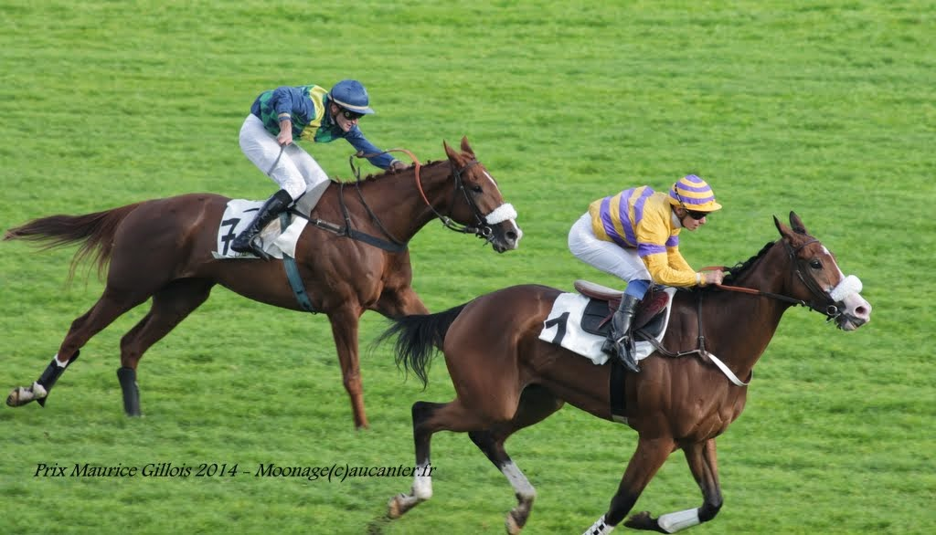 Photos Auteuil 2-11-2014 (48h de l'obstacle) IMG_5489