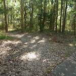 Enjoying the bushland Foreshore Track (403843)