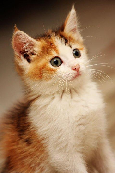 Umar Akib Notes Foto Gaya Kucing Yang Sangat Lucu Dan