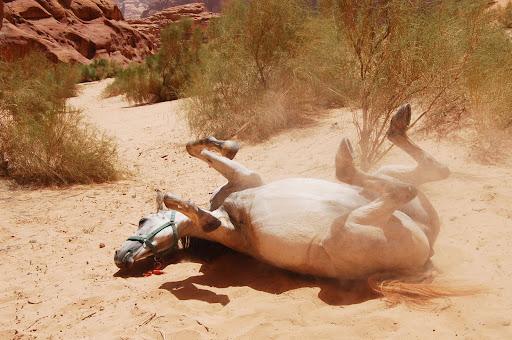 Иордания. Лошадь в пустыне