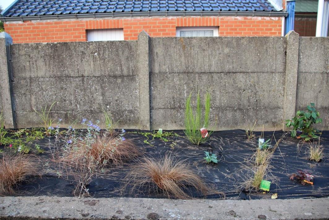Nouvelle maison dit aussi nouveau jardin... IMG_9528