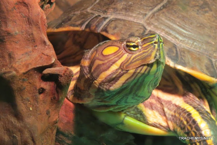 mes tortues (BK) - Page 5 IMG_0010