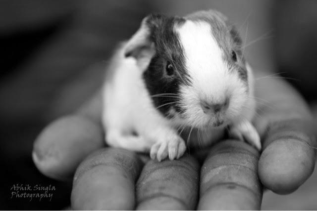 Innocent rabbit,hd wallpaper,cute rabbit,wild life,abhik singla,free download,photography