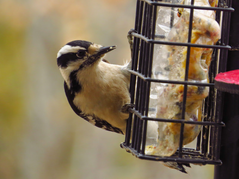 Invierno - Wild Birds Unlimited | Wild Birds Unlimited