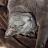 Sophie Smith avatar image