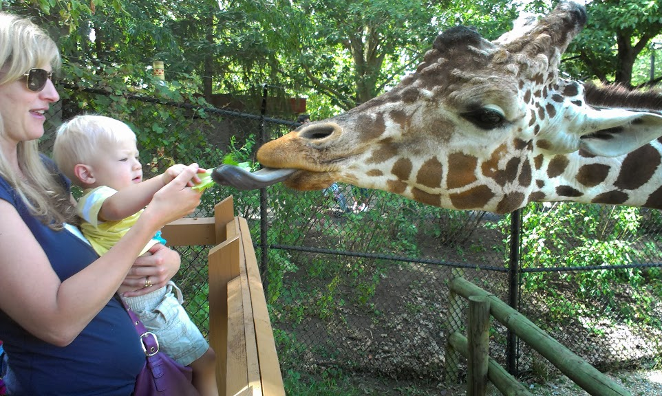 Bodhi feeding a giraffe