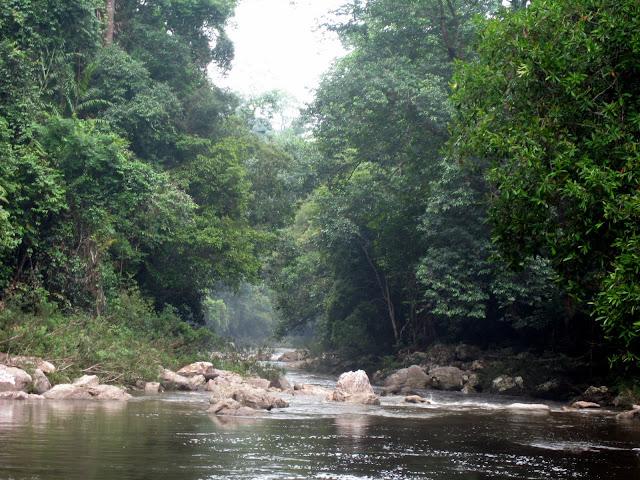 Blog de voyage-en-famille : Voyages en famille, Taman Negara, Lata Berkoh