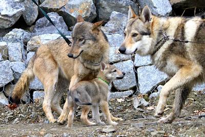 Besska, Ragnar a Ruby