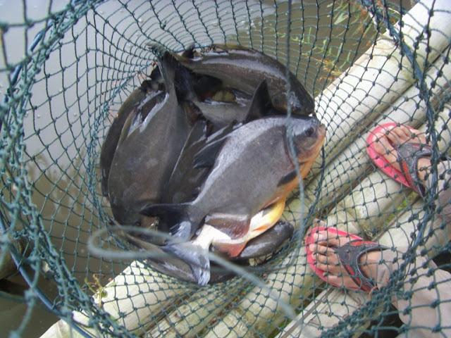 pemancingan limbangan