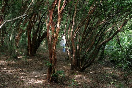 Bosque dos Camboins - Ilha do Pontal - novas imagens Mini_2013_03_1610_00_149270