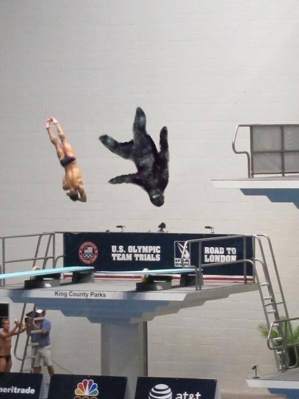 Sightings: Bigfoot High Dive