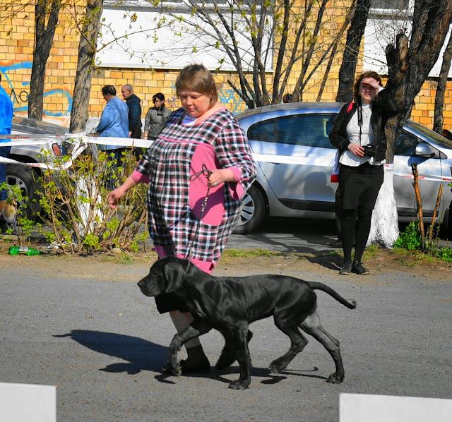 Кубок Аризоны-14(ПК)+ЧРКФ, Красноярск, 27 апреля 2014 DSC_5501
