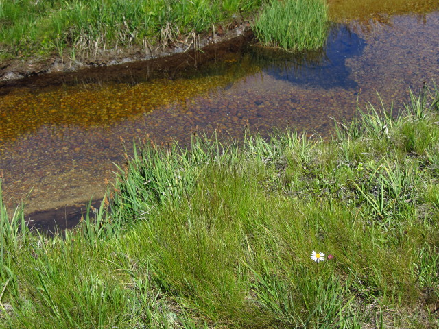 the stream running through the meadow