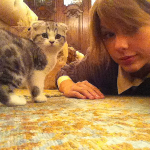 Taylor Swift and a cat