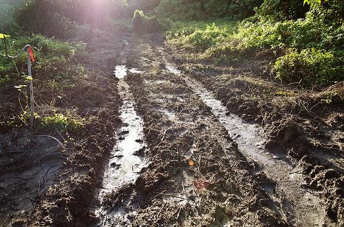 原本茂密的草地,變成裸露的表土。(圖片來源:地方居民提供)