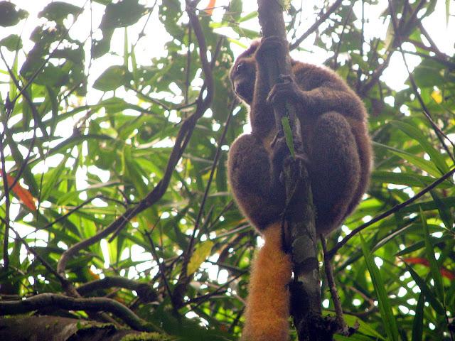 صور من مدغشقر Madagascar 14867366199