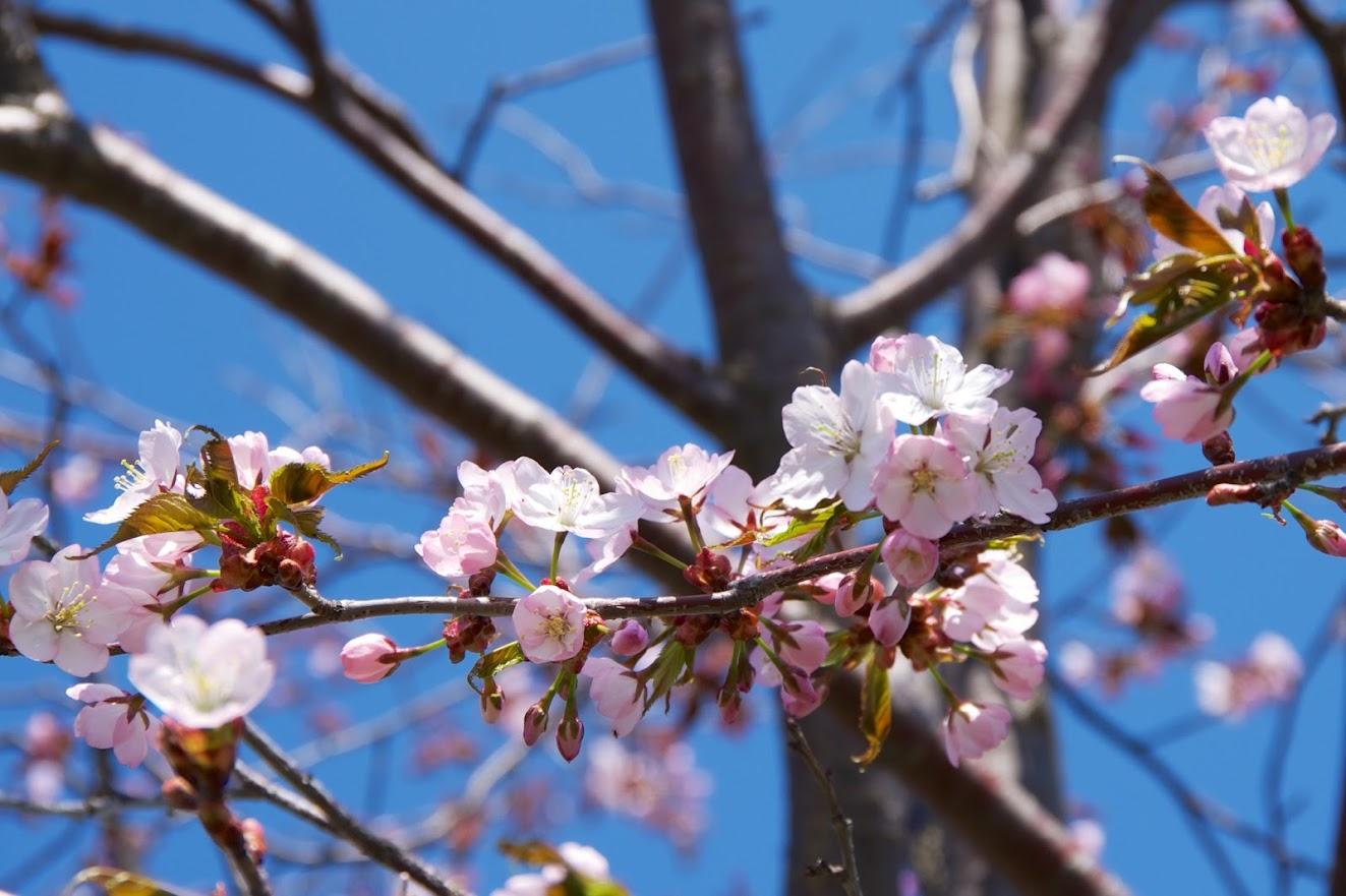 桜色の世界