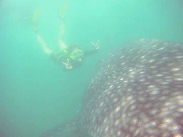 達人帶路-鯨鯊浮潛