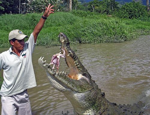 Questões e Fatos sobre Crocodilianos gigantes: Transferência de debate da comunidade Conflitos Selvagens.  - Página 2 116