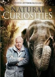 Natural Curiosities - Những điều kỳ lạ của thiên nhiên