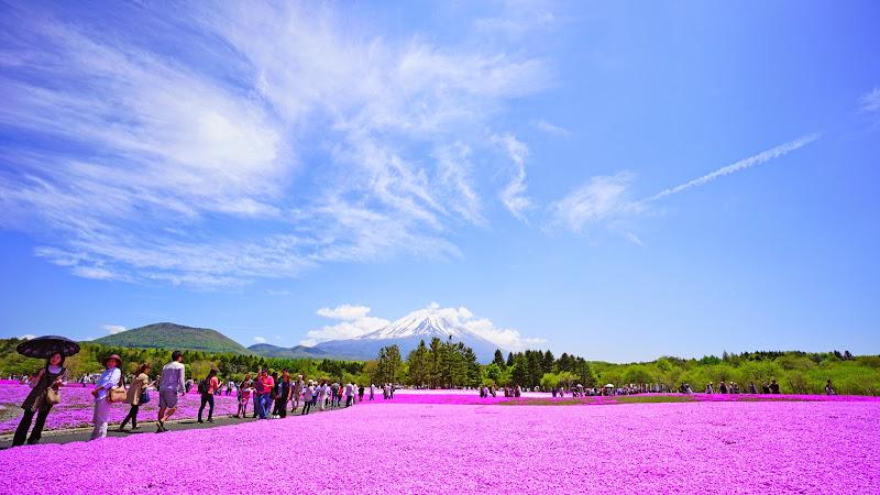 富士芝桜まつり 写真19