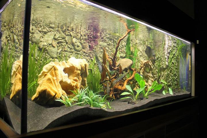 360l Akwarium Ogólne Wwwakwarystykanowysaczforapl