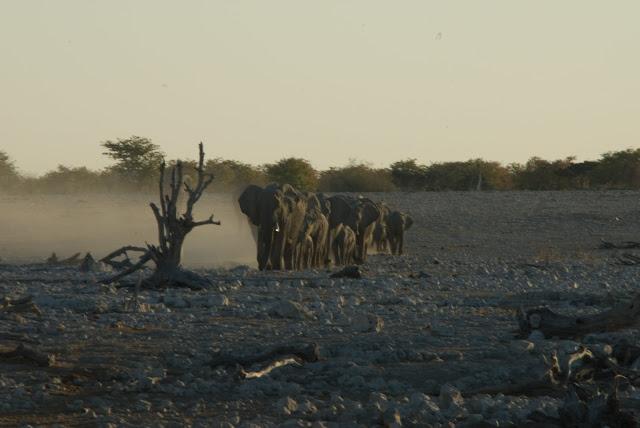 أفضل ما في أفريقيا  Best of Africa Namibia_180807171903