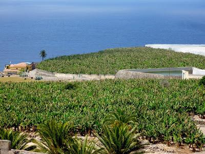 Bananenplantagen auf Gran Canaria