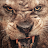 brandon daley avatar image