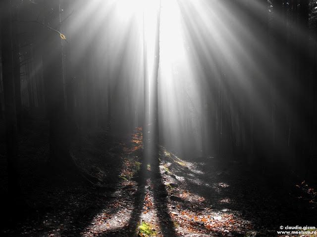 soare si ceata in padure - Muntii Ceahlau