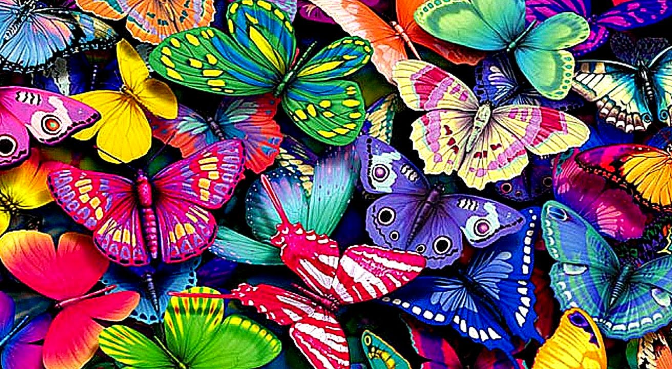 Butterfly Hd Wallpaper | Photo Wallpapers