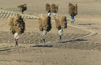 Pakistani farmers will be empowered through land reforms