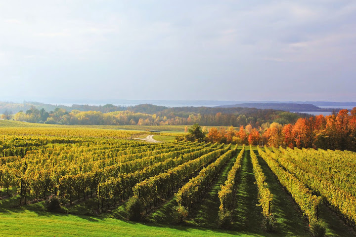 Chateau Grand Traverse Vineyards. From Michigan's Small Town Treasures: Wineries & Dinner on Mission Peninsula