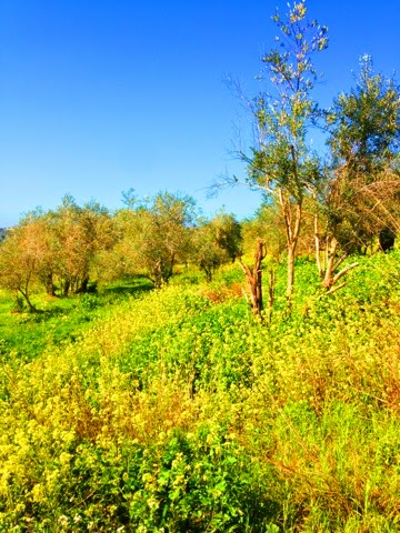 Landscape picture from South Lebanon.