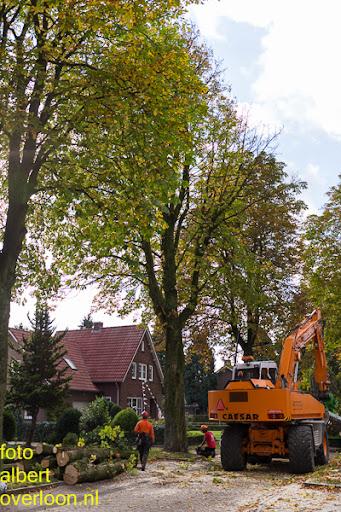 Bomen gekapt Museumlaan in overloon 20-10-2014 (26).jpg