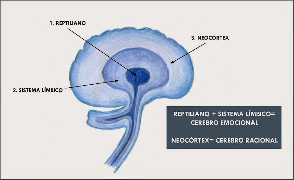 los-tres-cerebros-del-hombre