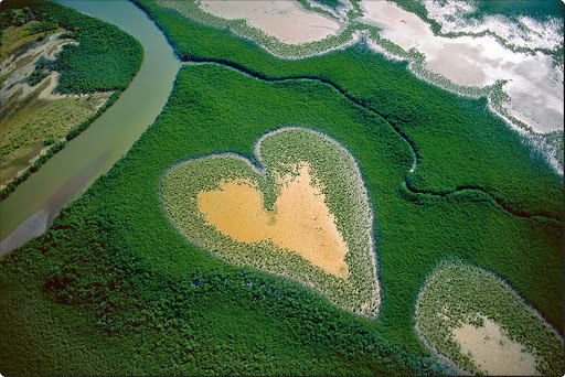 The world from above - Mangroves in New Caledonia.jpg