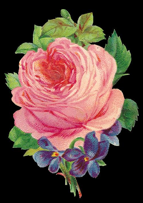 Resultado de imagen para imágenes de flores png