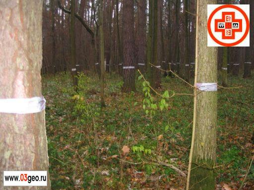 Подготовленный для подеревной съемки участок леса