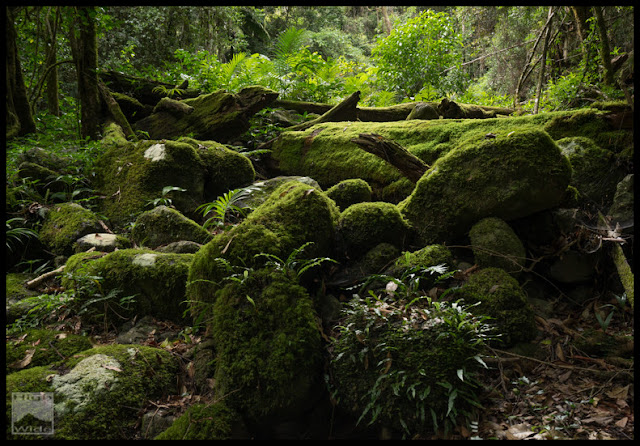 Mossy rocks and logs