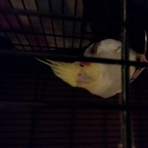 sideways bird review