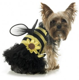 Crazy Cute Dog with Bee