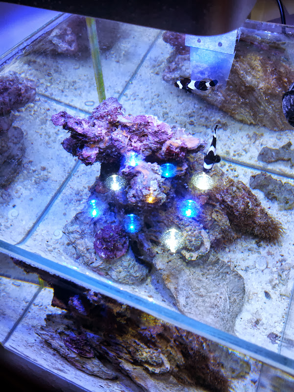 ada cube micmol nano led light pico reefs nano reef. Black Bedroom Furniture Sets. Home Design Ideas