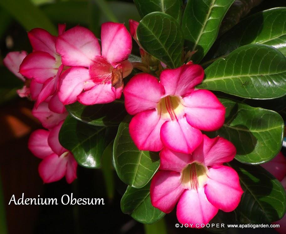 LOVELY FLOWERS DSCF8181%2520picadilo