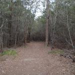 Track parallel to Bondi Lake (106786)