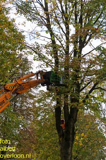 Bomen gekapt Museumlaan in overloon 20-10-2014 (12).jpg