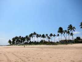 Palm trees on the beach in Brazil
