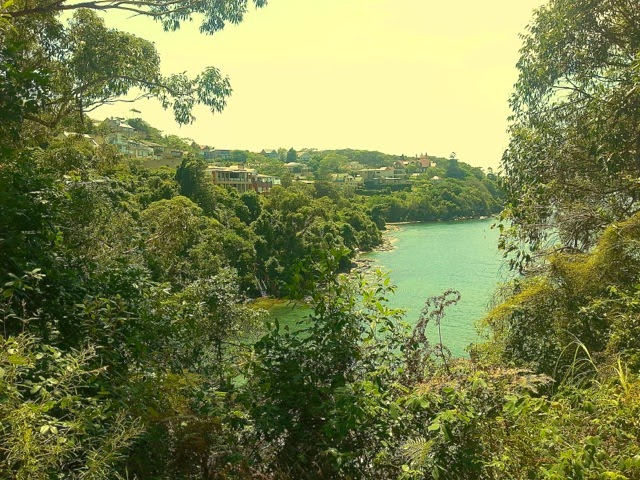 Lush growth and the suburb of wealthy Clifton Gardens - Sydney Harbour Walk