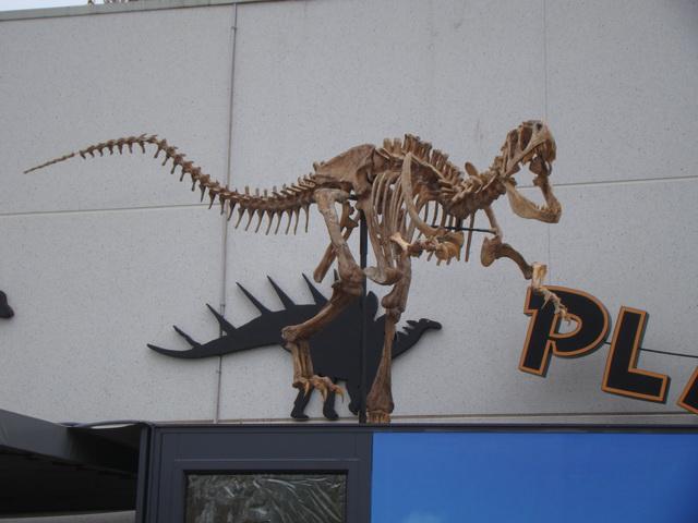 26%2520dynosaure.JPG