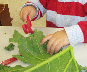 Child feels and cuts a large leaf.